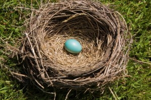Blue egg in bird's nest