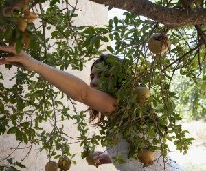 Young Woman Picking Pomegranates --- Image by © Bahar Yurukoglu/Corbis