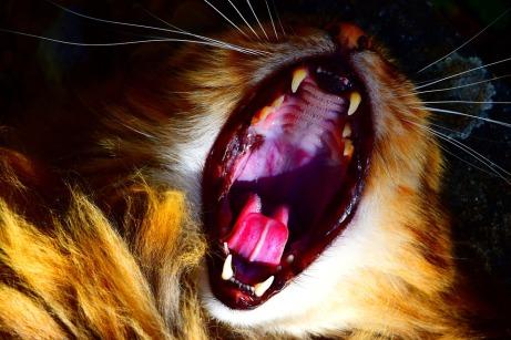cat-724551_960_720